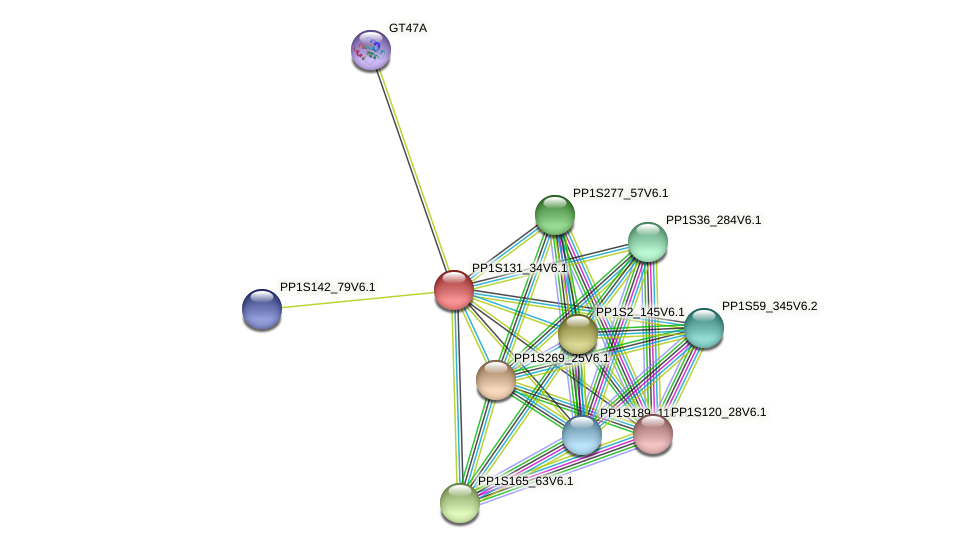 PP1S131_34V6.1 protein (Physcomitrella patens) - STRING interaction network