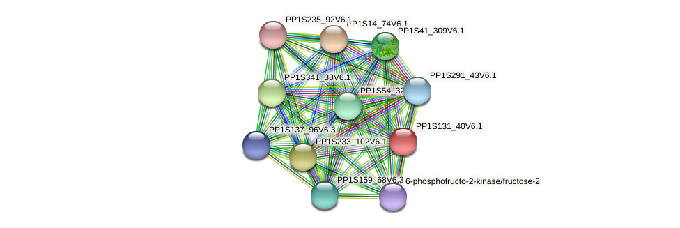 PP1S131_40V6.1 protein (Physcomitrella patens) - STRING interaction network