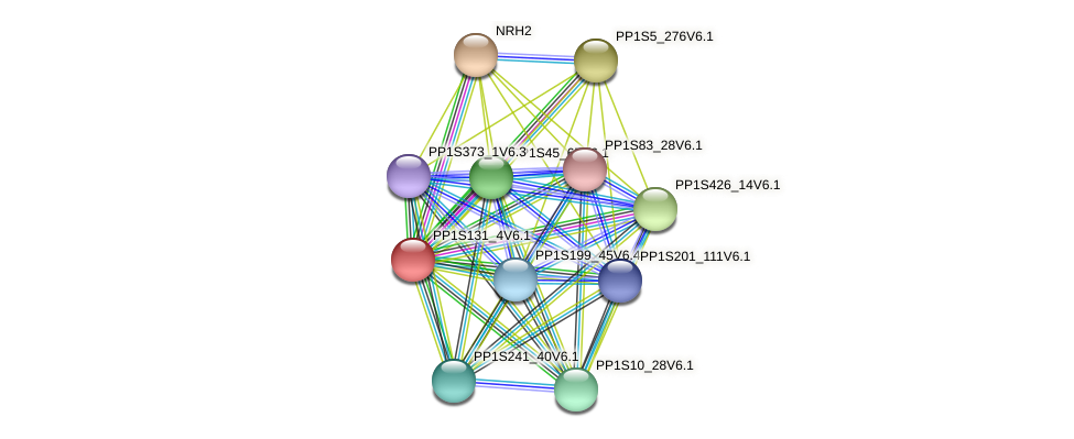 PP1S131_4V6.1 protein (Physcomitrella patens) - STRING interaction network