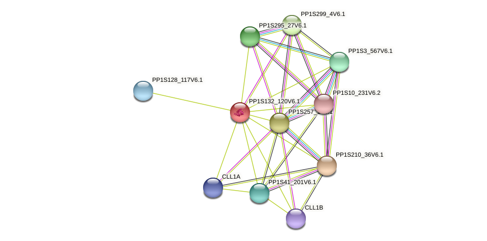 PP1S132_120V6.1 protein (Physcomitrella patens) - STRING interaction network