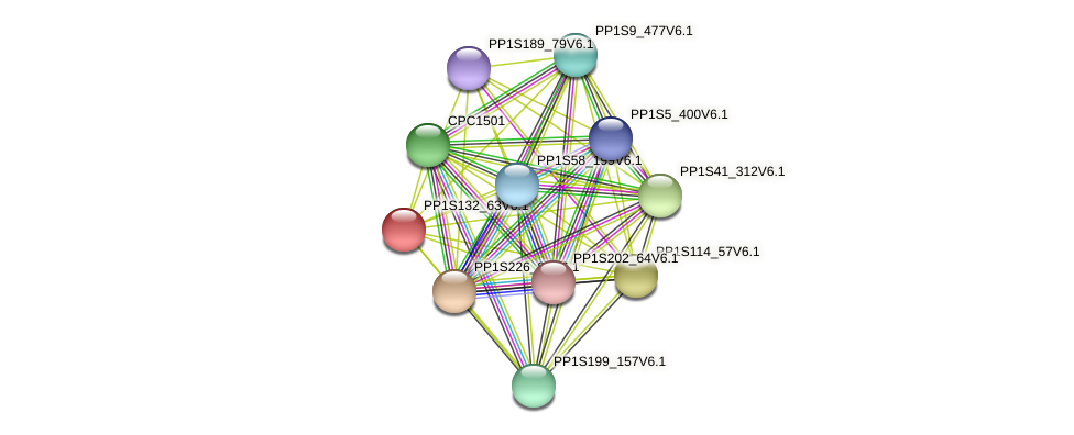PP1S132_63V6.1 protein (Physcomitrella patens) - STRING interaction network