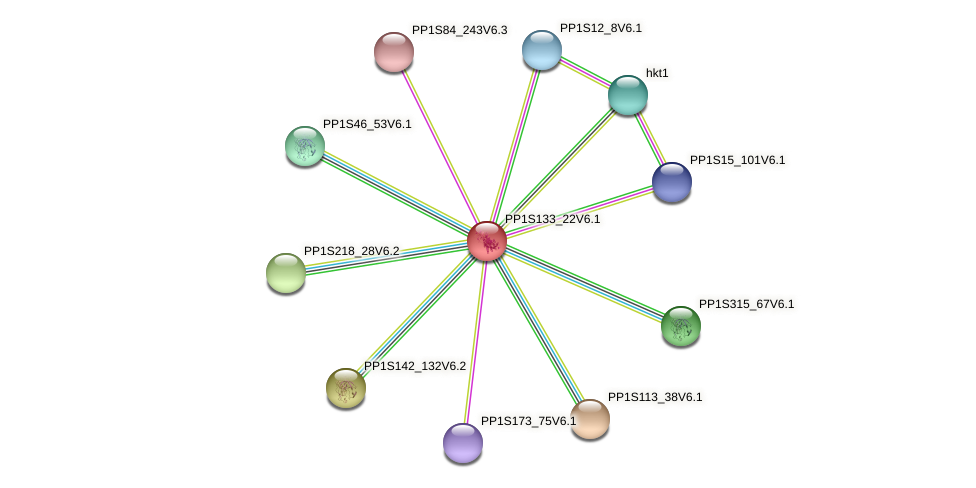 PP1S133_22V6.1 protein (Physcomitrella patens) - STRING interaction network