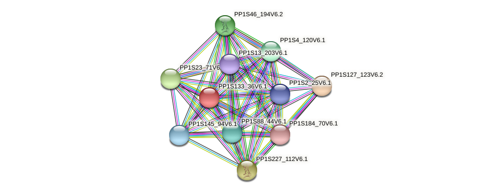 PP1S133_36V6.1 protein (Physcomitrella patens) - STRING interaction network