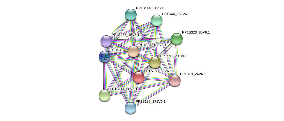 PP1S133_82V6.1 protein (Physcomitrella patens) - STRING interaction network