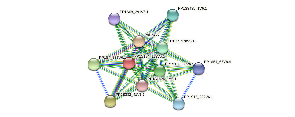 PP1S134_119V6.1 protein (Physcomitrella patens) - STRING interaction network