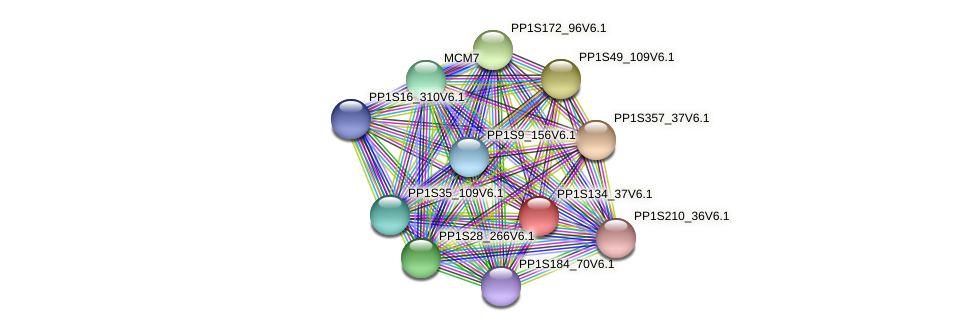 PP1S134_37V6.1 protein (Physcomitrella patens) - STRING interaction network