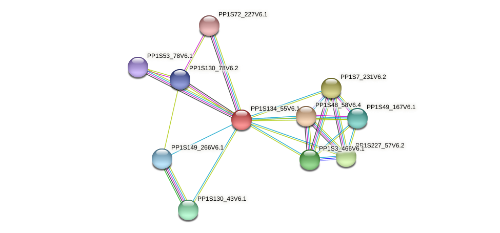 PP1S134_55V6.1 protein (Physcomitrella patens) - STRING interaction network