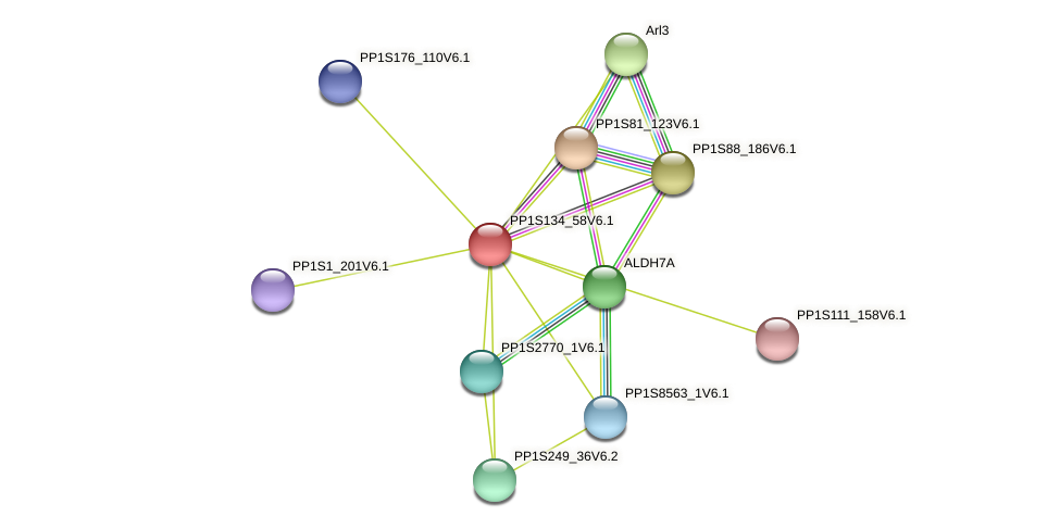 PP1S134_58V6.1 protein (Physcomitrella patens) - STRING interaction network