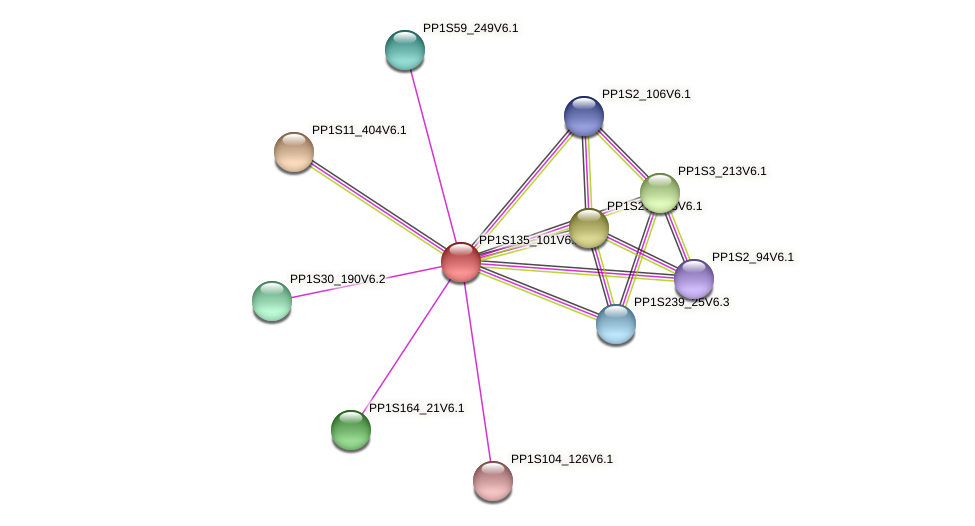PP1S135_101V6.1 protein (Physcomitrella patens) - STRING interaction network