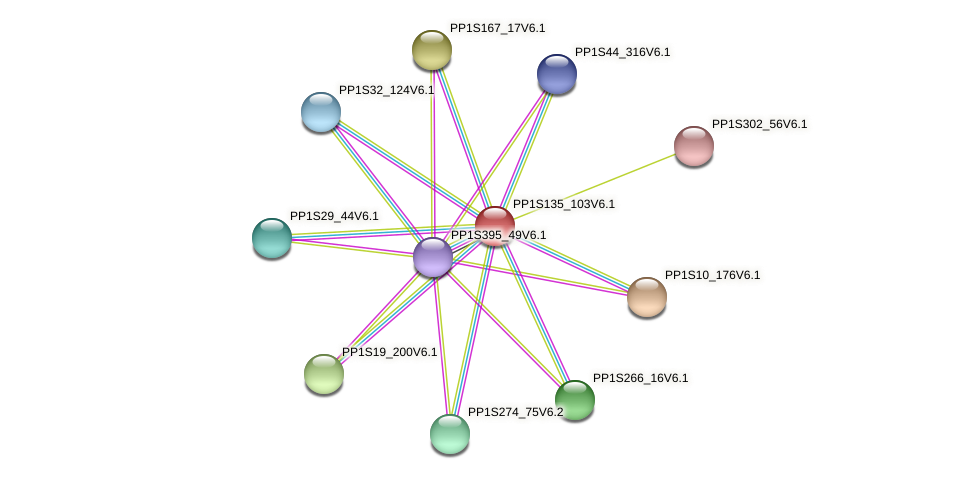 PP1S135_103V6.1 protein (Physcomitrella patens) - STRING interaction network