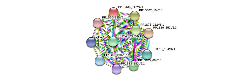 PP1S135_112V6.1 protein (Physcomitrella patens) - STRING interaction network