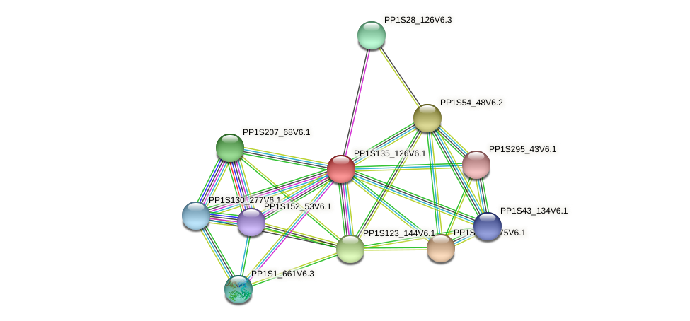 PP1S135_126V6.1 protein (Physcomitrella patens) - STRING interaction network