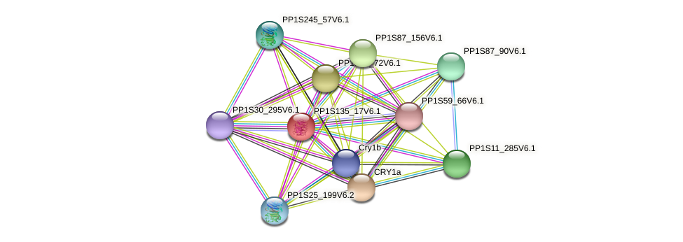 PP1S135_17V6.1 protein (Physcomitrella patens) - STRING interaction network