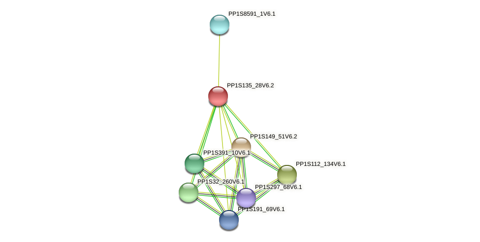 PP1S135_28V6.1 protein (Physcomitrella patens) - STRING interaction network