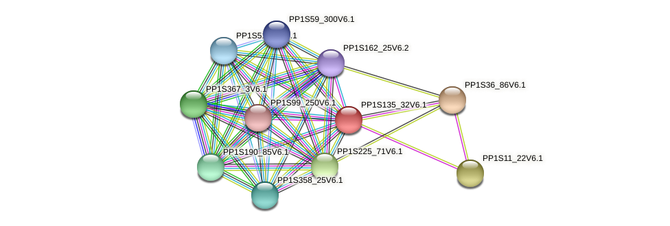 PP1S135_32V6.1 protein (Physcomitrella patens) - STRING interaction network