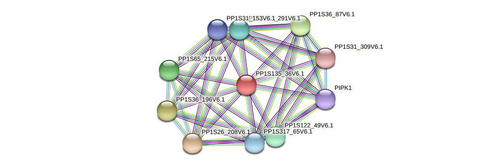 PP1S135_36V6.1 protein (Physcomitrella patens) - STRING interaction network