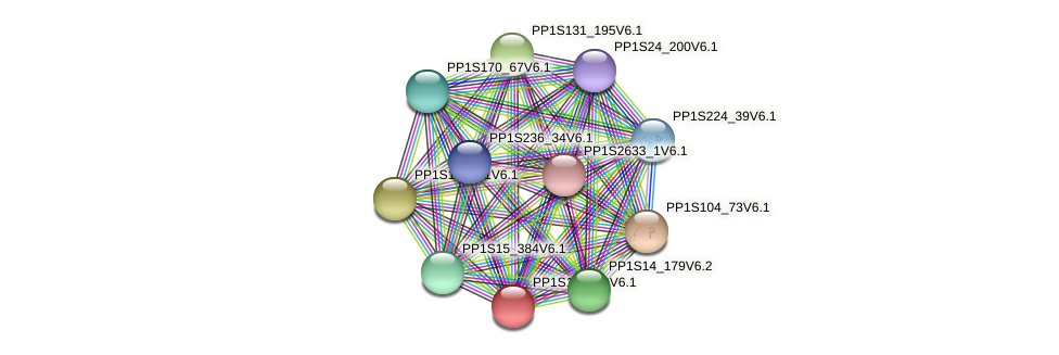 PP1S135_90V6.1 protein (Physcomitrella patens) - STRING interaction network