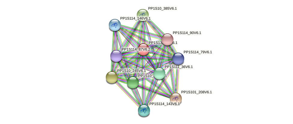 rpl16 protein (Physcomitrella patens) - STRING interaction network