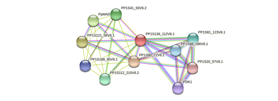 PP1S136_112V6.1 protein (Physcomitrella patens) - STRING interaction network