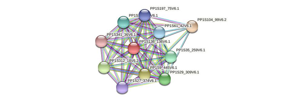 PP1S136_136V6.1 protein (Physcomitrella patens) - STRING interaction network