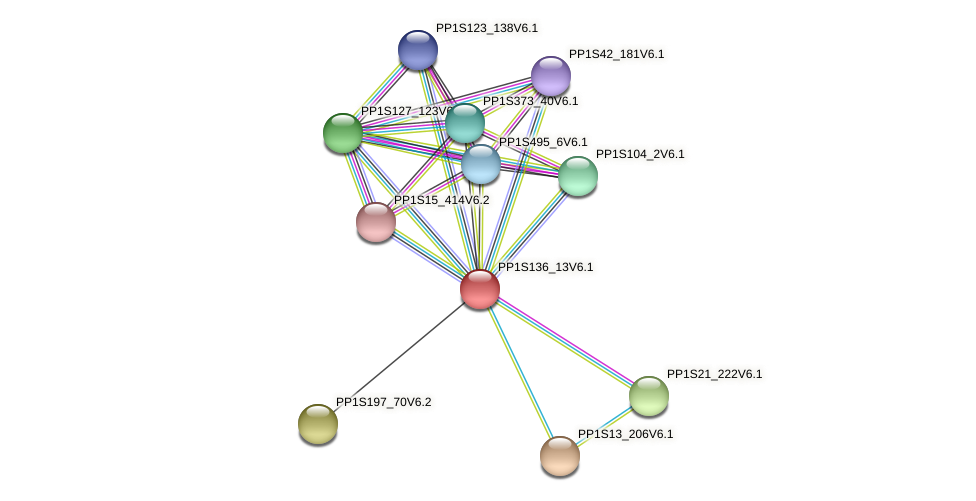 PP1S136_13V6.1 protein (Physcomitrella patens) - STRING interaction network