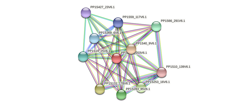PP1S136_203V6.1 protein (Physcomitrella patens) - STRING interaction network