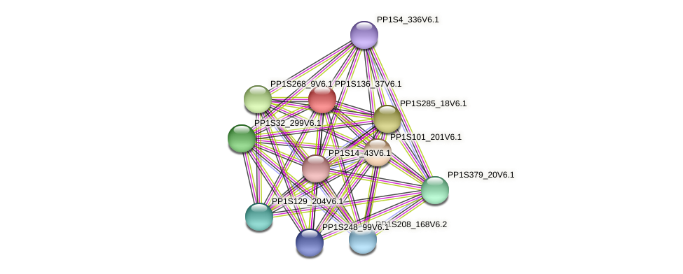PP1S136_37V6.1 protein (Physcomitrella patens) - STRING interaction network