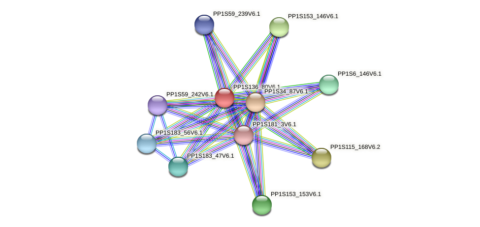 PP1S136_80V6.1 protein (Physcomitrella patens) - STRING interaction network