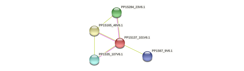 PP1S137_101V6.1 protein (Physcomitrella patens) - STRING interaction network