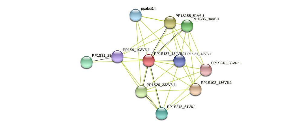 PP1S137_134V6.1 protein (Physcomitrella patens) - STRING interaction network