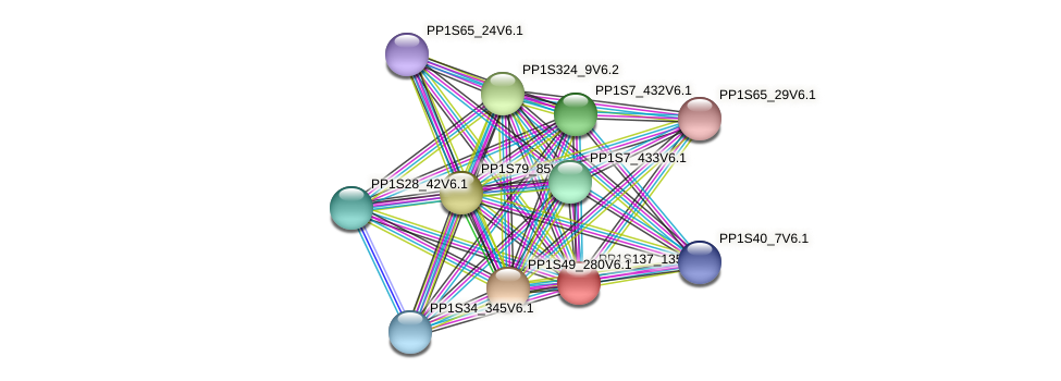 PP1S137_135V6.1 protein (Physcomitrella patens) - STRING interaction network