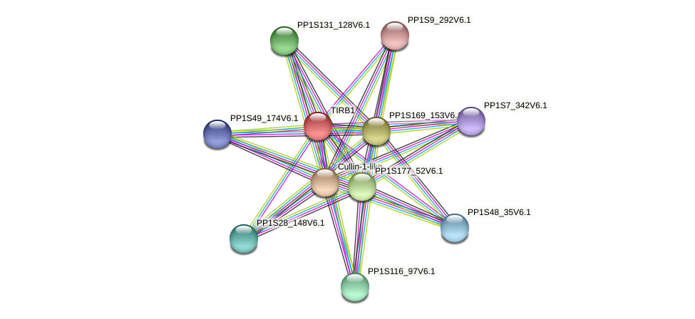 TIRB1 protein (Physcomitrella patens) - STRING interaction network
