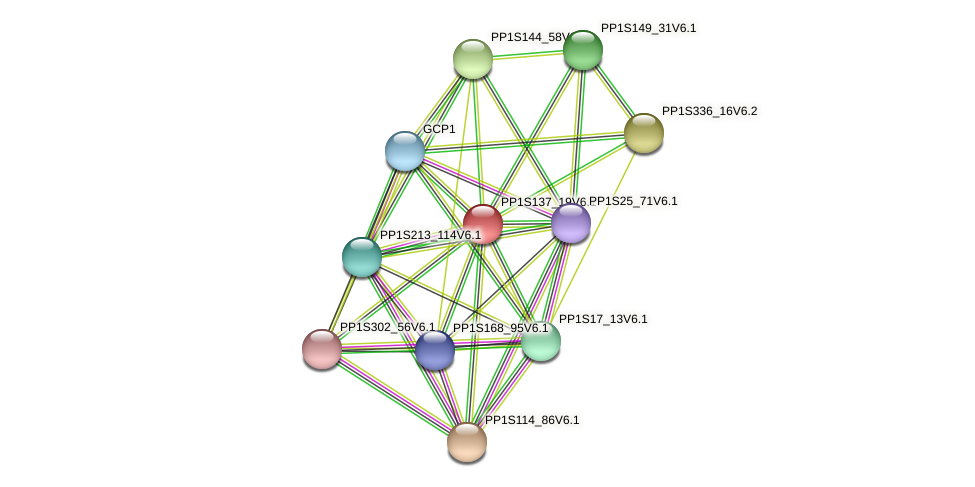PP1S137_19V6.1 protein (Physcomitrella patens) - STRING interaction network