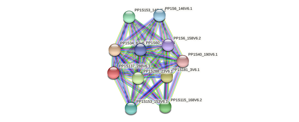 PP1S137_288V6.1 protein (Physcomitrella patens) - STRING interaction network