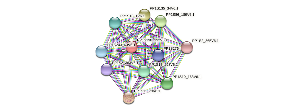 PP1S138_132V6.1 protein (Physcomitrella patens) - STRING interaction network