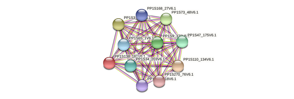 PP1S138_181V6.1 protein (Physcomitrella patens) - STRING interaction network