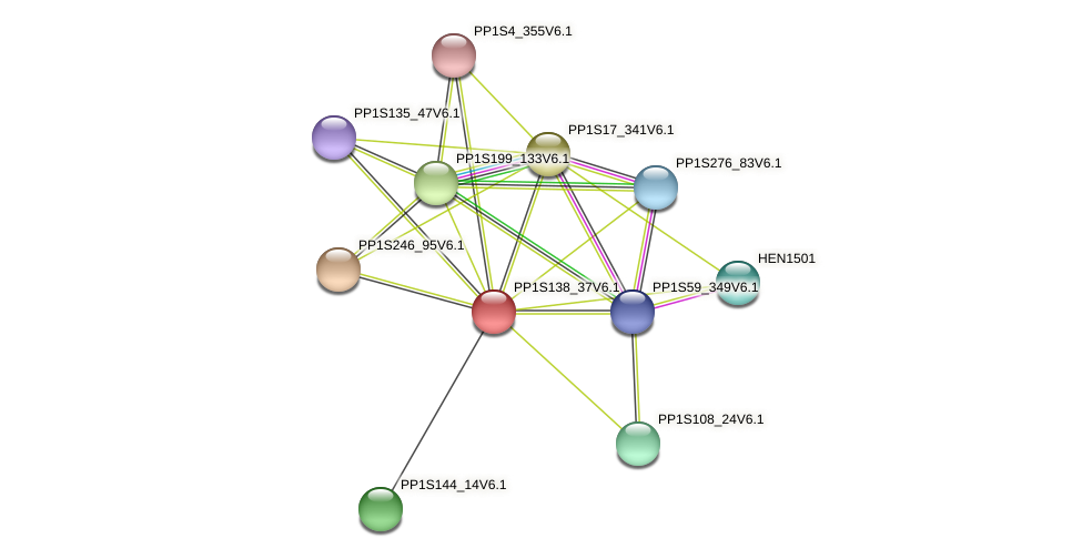 PP1S138_37V6.1 protein (Physcomitrella patens) - STRING interaction network