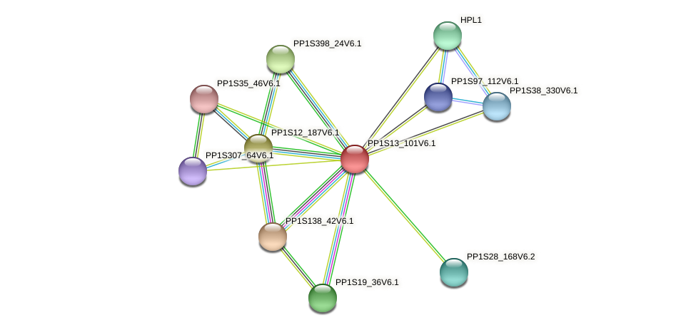 PP1S13_101V6.1 protein (Physcomitrella patens) - STRING interaction network