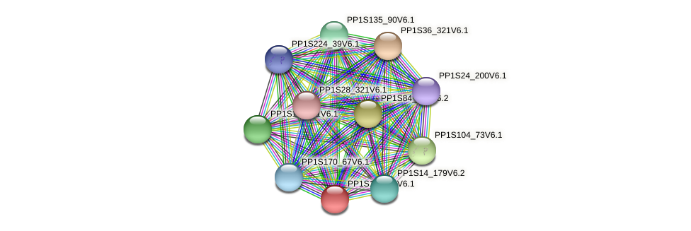 PP1S13_116V6.1 protein (Physcomitrella patens) - STRING interaction network