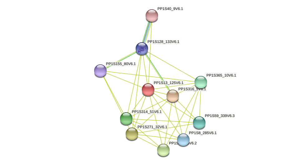PP1S13_125V6.1 protein (Physcomitrella patens) - STRING interaction network