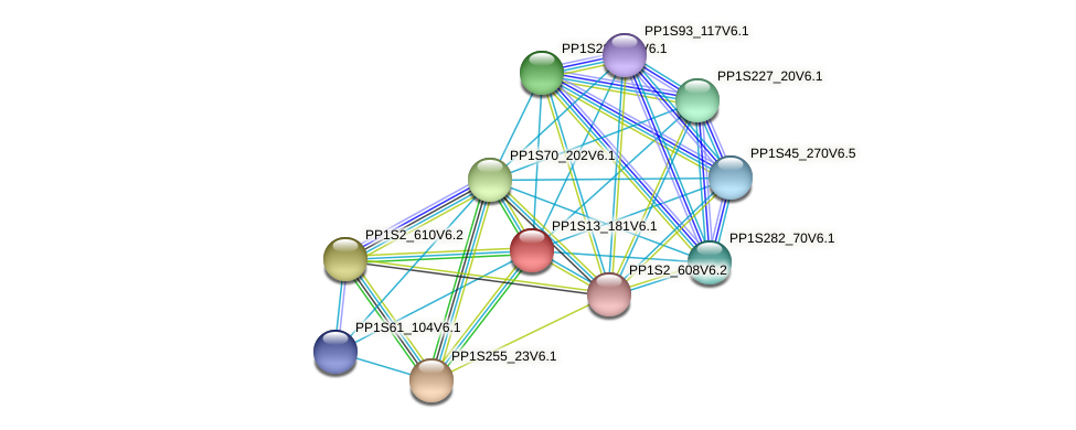 PP1S13_181V6.1 protein (Physcomitrella patens) - STRING interaction network
