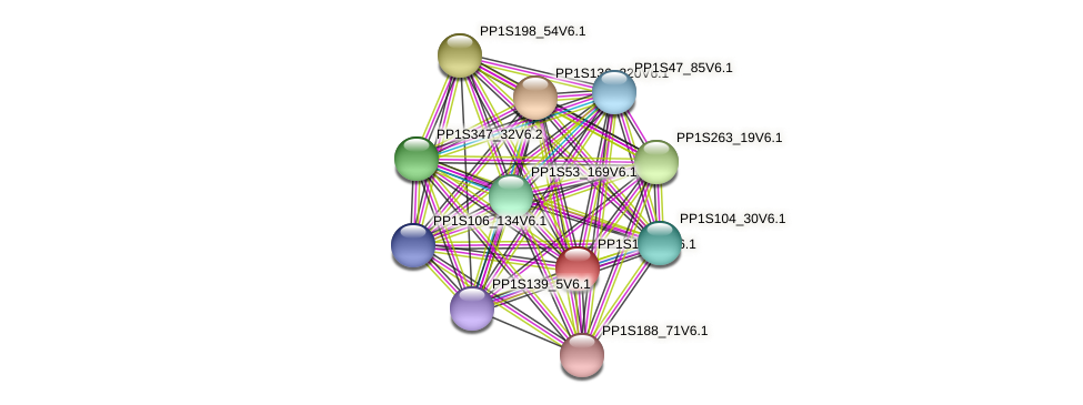 PP1S13_19V6.1 protein (Physcomitrella patens) - STRING interaction network