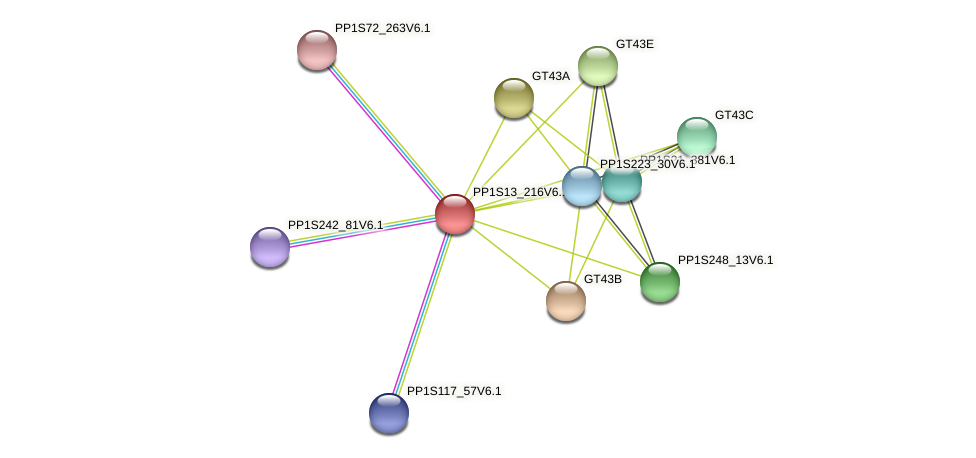 PP1S13_216V6.1 protein (Physcomitrella patens) - STRING interaction network