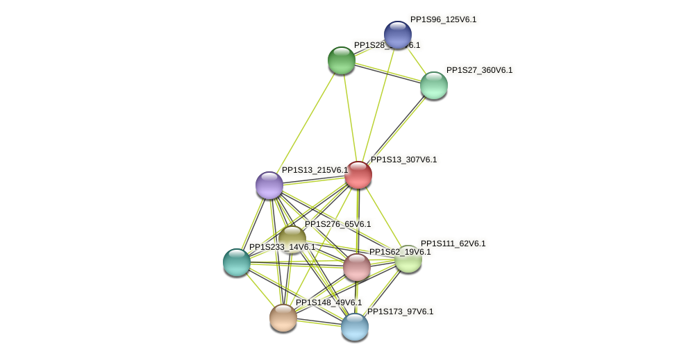 PP1S13_307V6.1 protein (Physcomitrella patens) - STRING interaction network