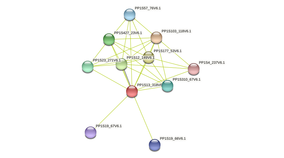 PP1S13_318V6.1 protein (Physcomitrella patens) - STRING interaction network
