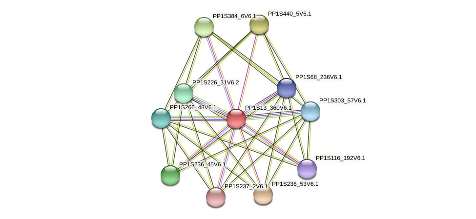 PP1S13_360V6.1 protein (Physcomitrella patens) - STRING interaction network