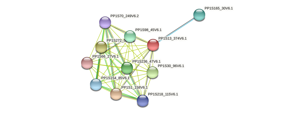 PP1S13_374V6.1 protein (Physcomitrella patens) - STRING interaction network