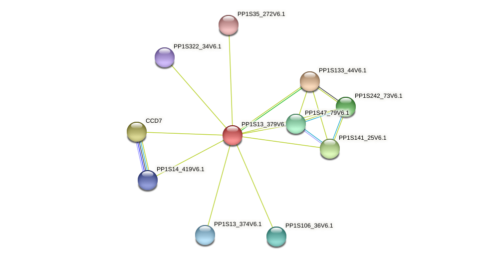 PP1S13_379V6.1 protein (Physcomitrella patens) - STRING interaction network