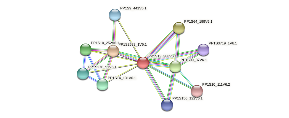 PP1S13_388V6.1 protein (Physcomitrella patens) - STRING interaction network