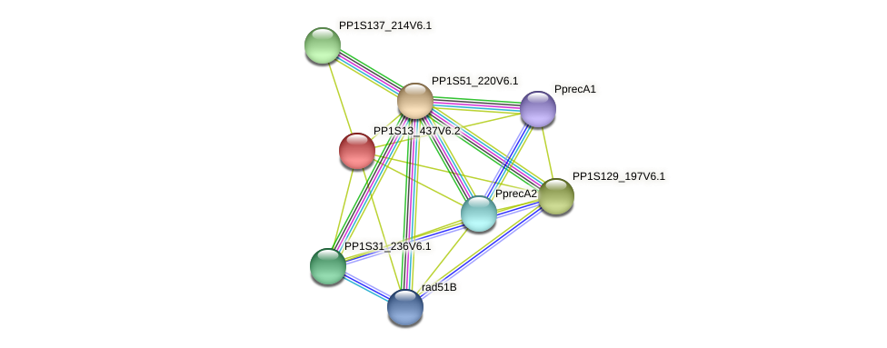 PP1S13_437V6.2 protein (Physcomitrella patens) - STRING interaction network